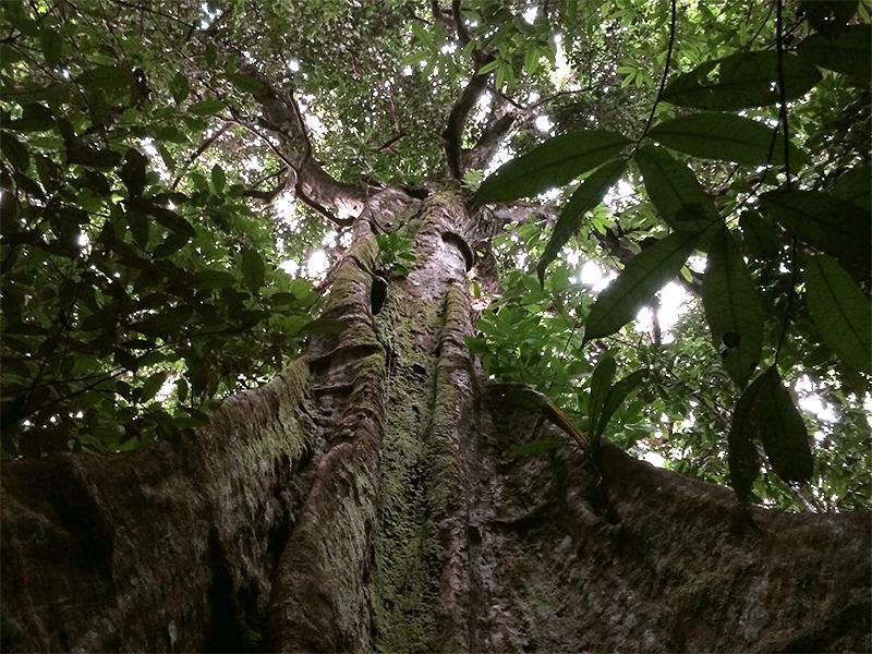 Rainforest Responsibility